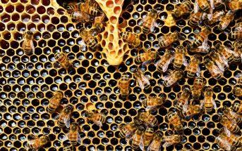 BeeHive - HiveMicro review